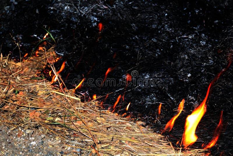 Feuer, selektiver Fokus des brennenden Heus des Feuers stockfotografie