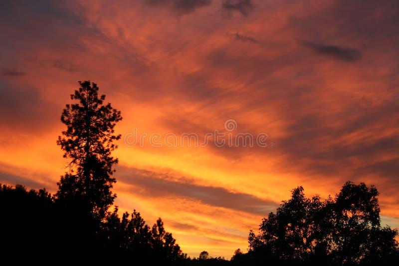 Feuer-Sonnenuntergang mit Schattenbildbäumen stockfotos