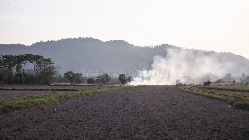 Feuer und Rauch im Paddy ENV 8 Landwirtschaftskonzeptidee Blauer Hintergrund stockfotografie