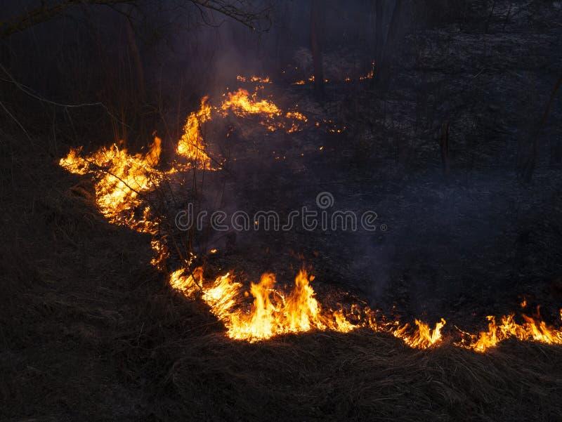 Feuer verheerendes Feuer, brennender Kiefernwald im Rauche und Flammen lizenzfreies stockbild