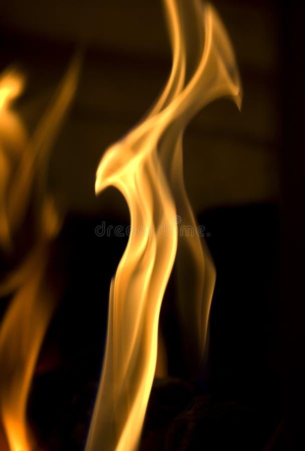 Feuer-Vogel stockbilder