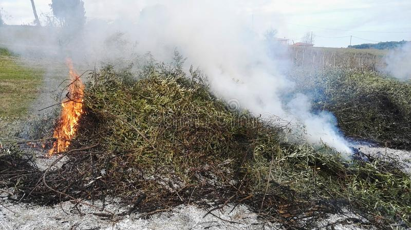 Feuer von getrockneten Niederlassungen lizenzfreie stockfotos