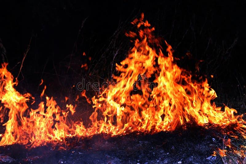 Feuer, Waldbrand nachts, selektiver Fokus des brennenden Heus des Feuers stockfotografie