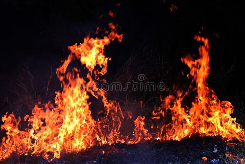 Feuer, Waldbrand nachts, selektiver Fokus des brennenden Heus des Feuers stockfotos