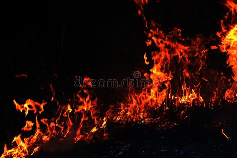 Feuer, Waldbrand nachts, selektiver Fokus des brennenden Heus des Feuers lizenzfreie stockfotografie