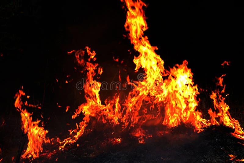 Feuer, Waldbrand nachts, selektiver Fokus des brennenden Heus des Feuers lizenzfreies stockbild