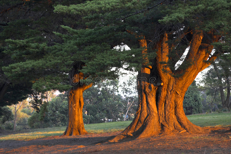 Feuerbäume lizenzfreie stockfotografie