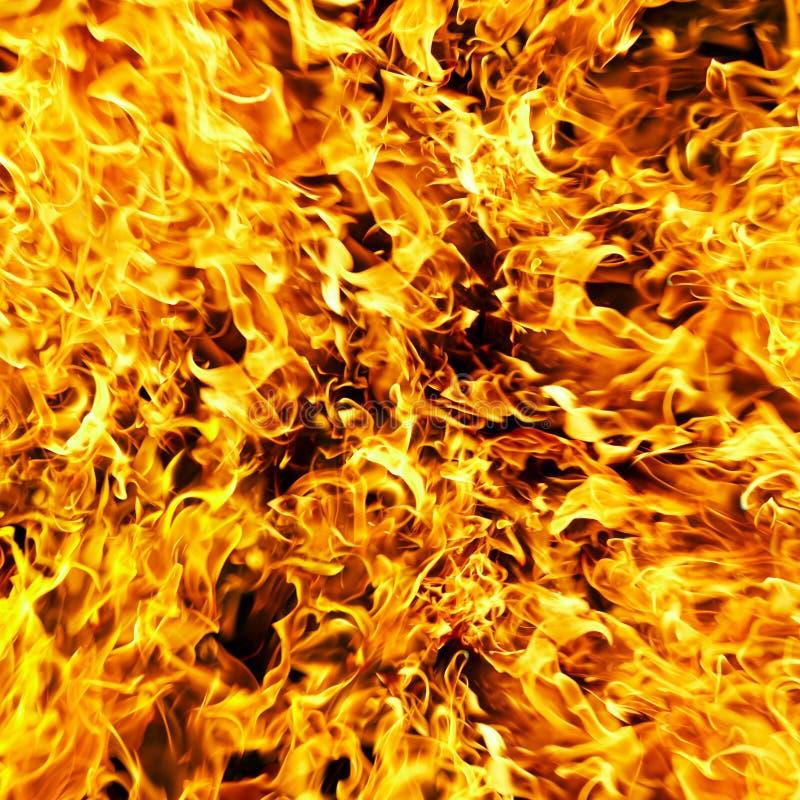Feuerfoto auf einem schwarzen Hintergrund stockfotografie