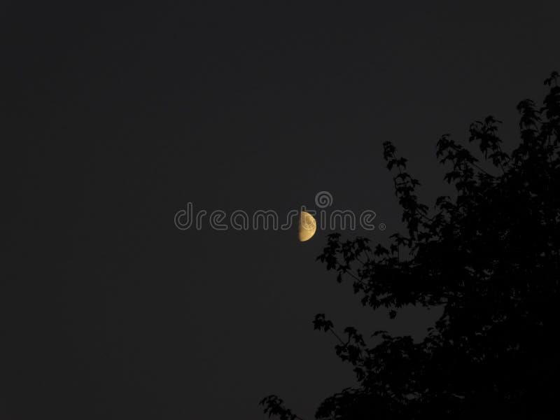 Feuermond mit schwarzem Baum lizenzfreies stockbild