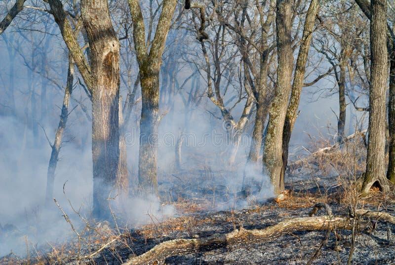 Feuern Sie in Wald 14 ab stockfoto