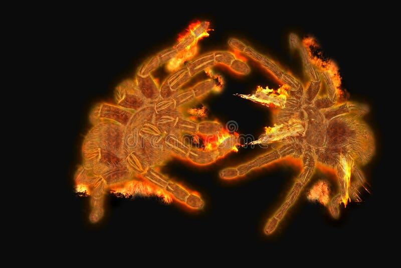 Feuerspinnen stockfoto