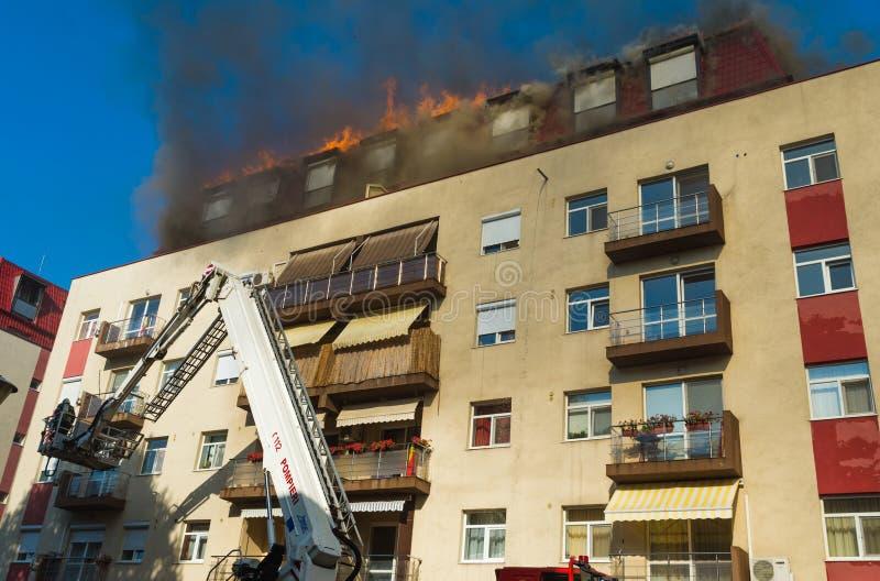 Feuerwehrmänner in der Tätigkeit stockfotografie