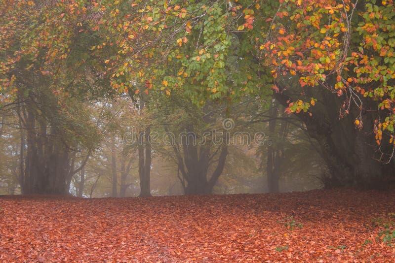 Feuillage automnal dans la réserve naturelle de Canfaito dans la région du Marche photos stock