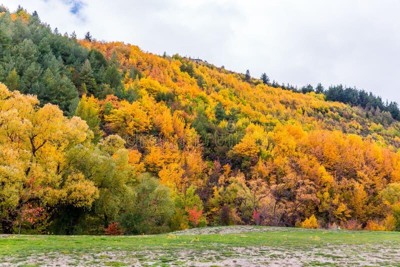 Feuillage coloré d'automne et pins verts dans Arrowtown images libres de droits