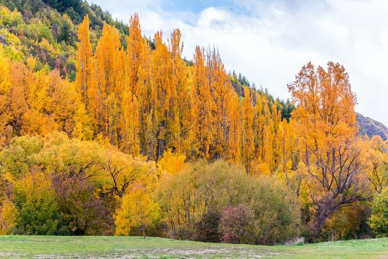 Feuillage coloré d'automne et pins verts dans Arrowtown photographie stock libre de droits