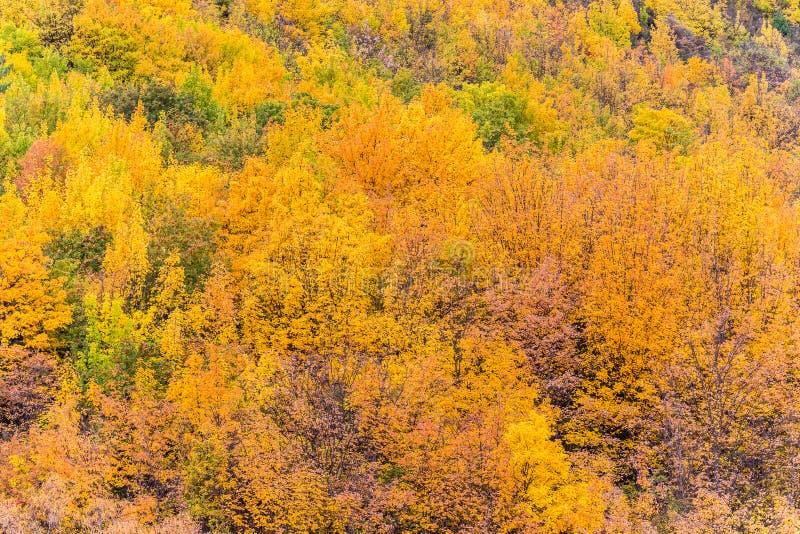 Feuillage coloré d'automne et pins verts dans Arrowtown image libre de droits