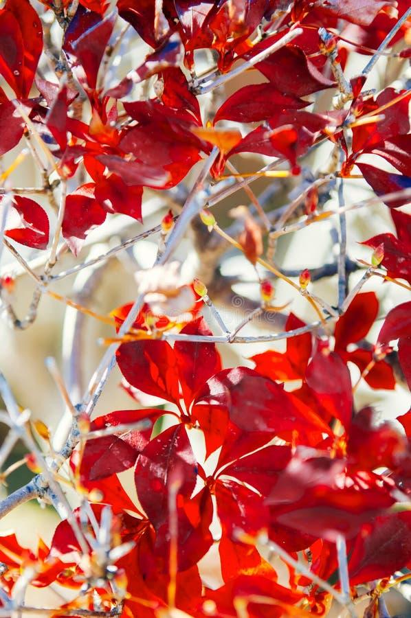 Feuillage coloré de feuilles d'automne, ville de Sakura, Chiba, Japon image stock