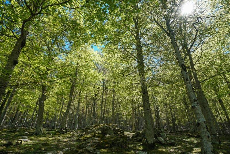 Feuillage d'arbres dans la for?t France Pyr?n?es Orientales photos stock