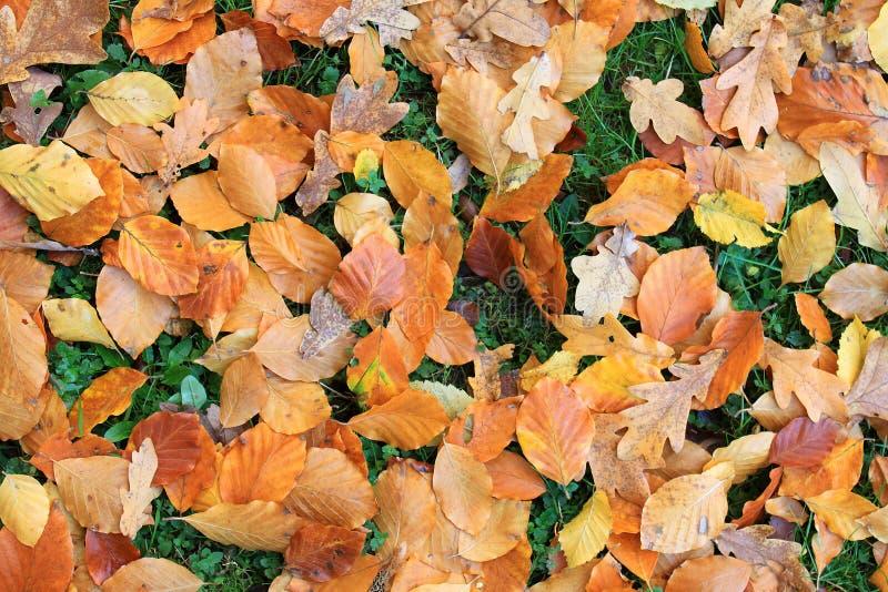 Feuillage d'automne images stock