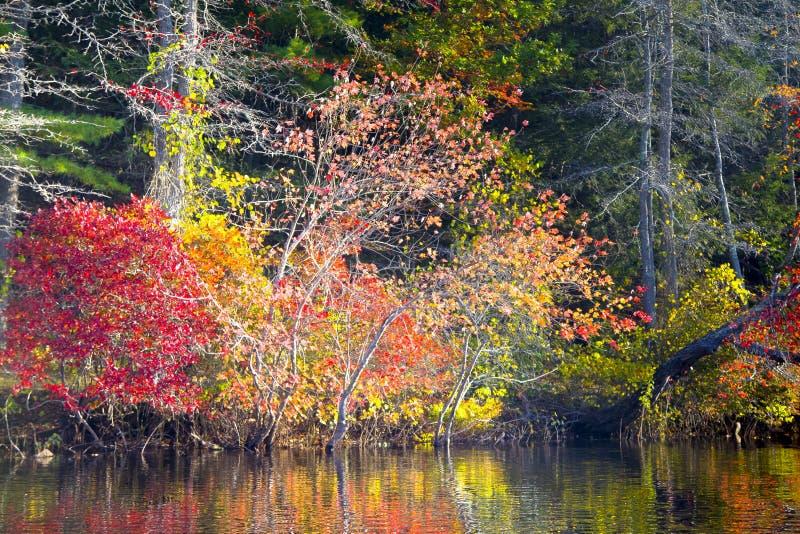 Download Feuillage d'automne photo stock. Image du forêt, scenics - 45364012