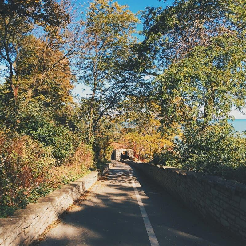 Feuillage d'automne photographie stock