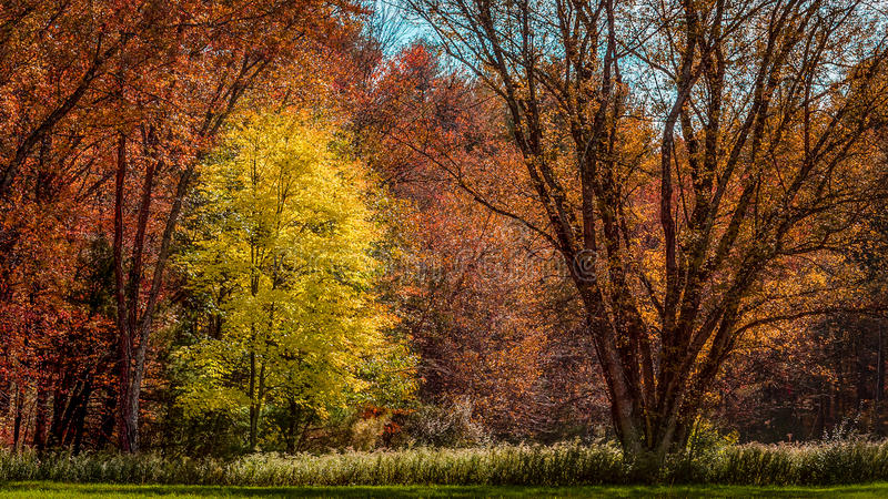 Feuillage d'automne photo stock