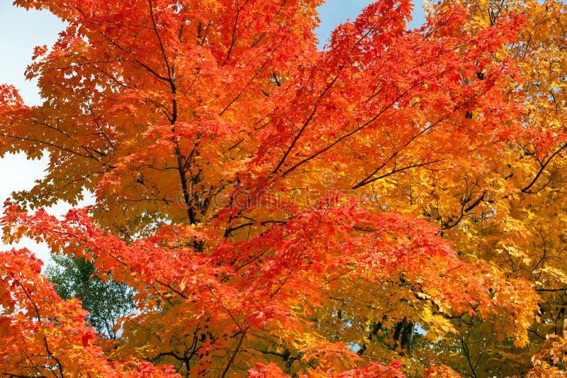 Feuillage d'automne photos libres de droits