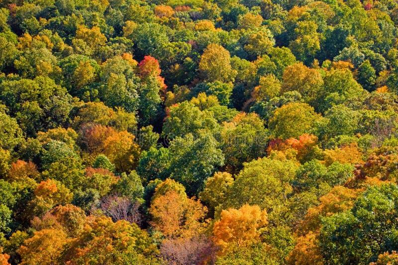 Feuillage d'automne de la Nouvelle Angleterre photographie stock libre de droits