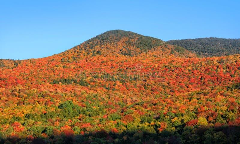 Feuillage d'automne de spectacular de montagnes du Vermont photographie stock