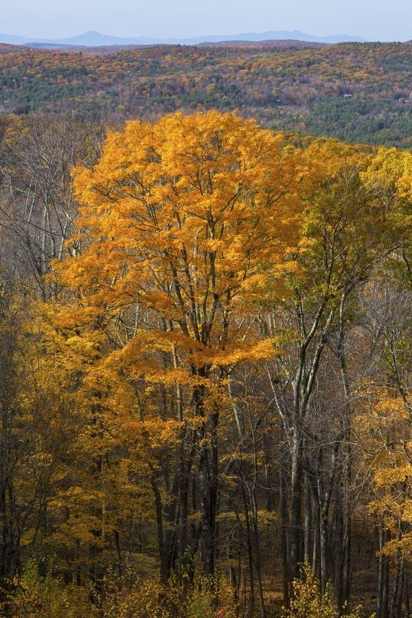 Feuillage d'automne en bois du Connecticut occidental, du Mohawk Mounta images stock