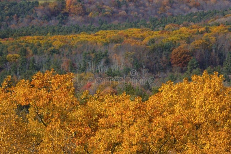 Feuillage d'automne en bois du Connecticut occidental, du Mohawk Mounta images libres de droits