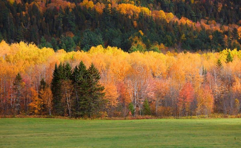 Feuillage d'automne en montagnes du Québec photo stock