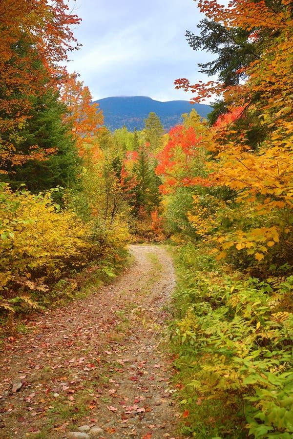 Feuillage d'automne le long de vieux chemin de terre en vallée de Carrabasset, Maine photos libres de droits