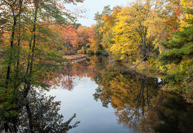 Feuillage d'automne maximal images libres de droits