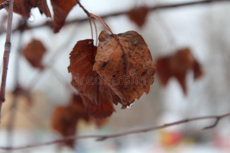 Feuillage d'automne Pluie en novembre photographie stock libre de droits