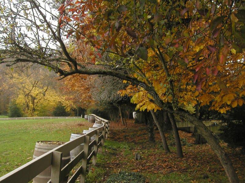 Feuillage d'automne pour les raisons photos stock