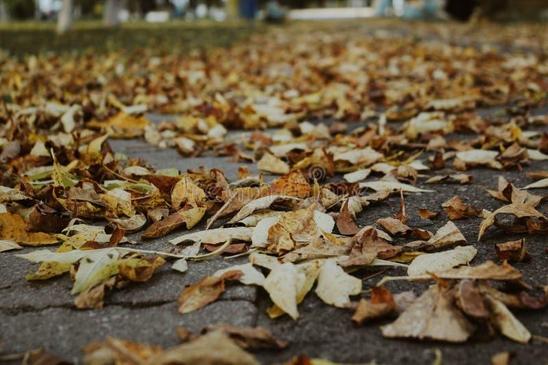 feuillage d'automne sur la route photos stock