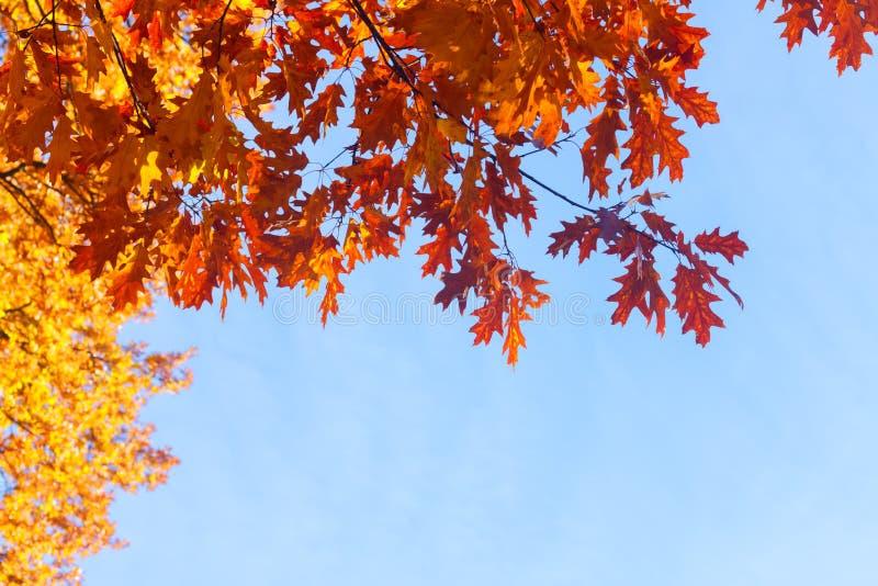 Download Feuillage D'automne Vibrant Photo stock - Image du bleu, lumineux: 77158890