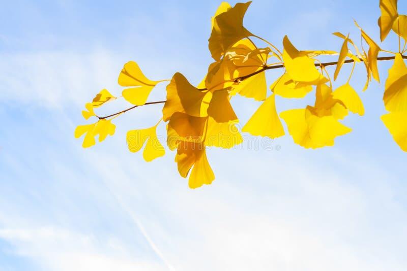 Download Feuillage D'automne Vibrant Image stock - Image du extérieur, lumineux: 77159829