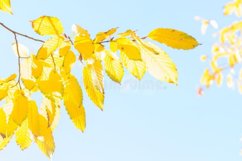 Download Feuillage D'automne Vibrant Photo stock - Image du coloré, novembre: 77160290