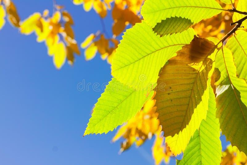 Download Feuillage D'automne Vibrant Photo stock - Image du horizontal, lumière: 77161050