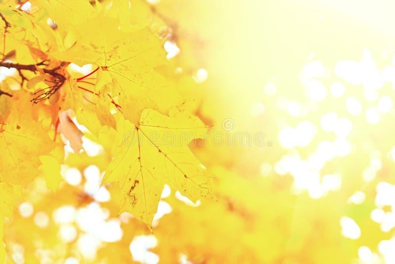 Feuillage d'automne vibrant photographie stock