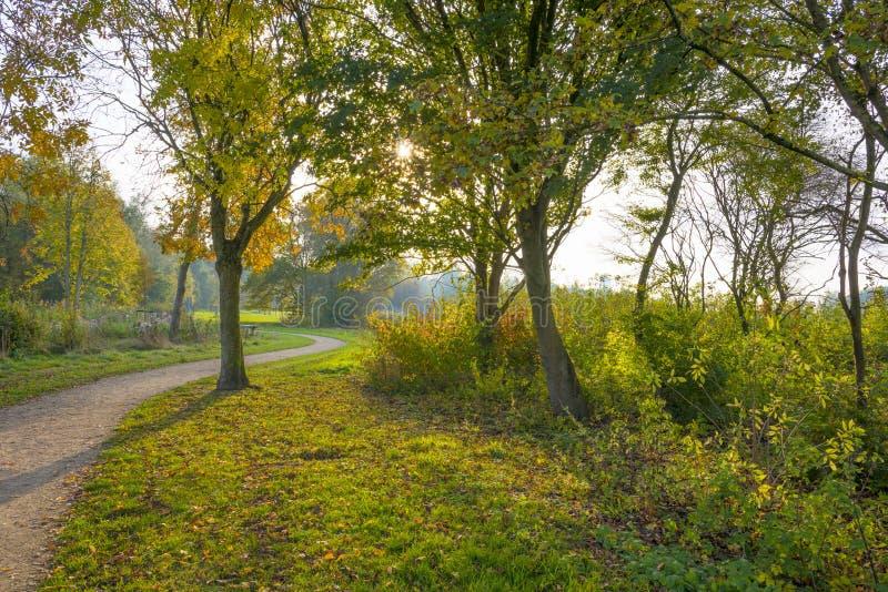 Feuillage d'un arbre en parc dans des couleurs d'automne au soleil à la chute photo stock