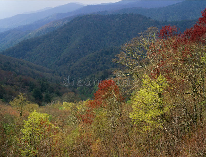 Feuillage de printemps dans la réserve forestière cherokee, parc national de Great Smoky Mountains, la Caroline du Nord images libres de droits