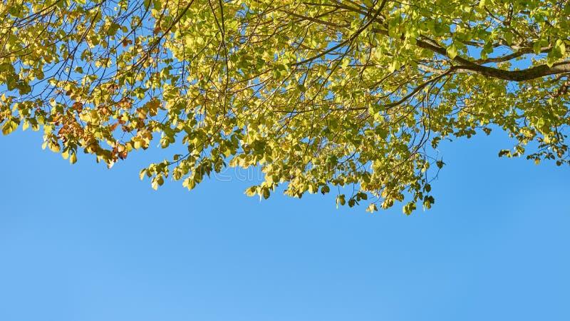 Feuillage des arbres contre un ciel bleu lumineux images stock