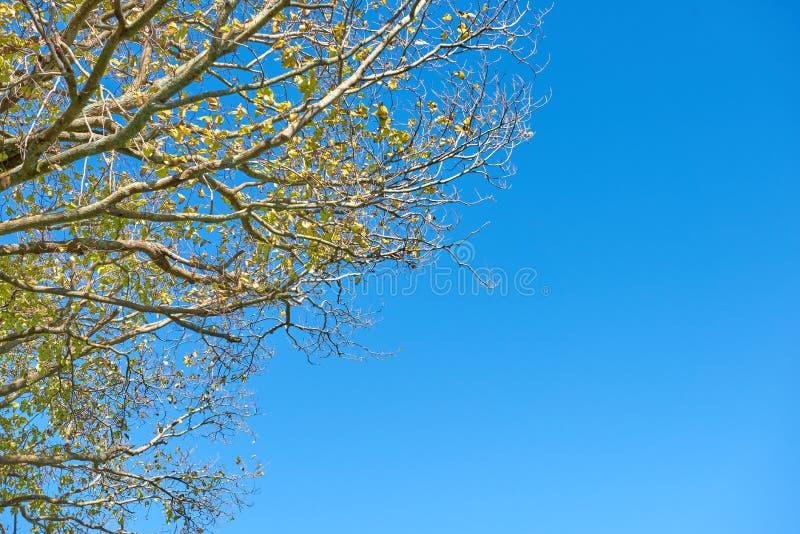 Feuillage des arbres contre un ciel bleu lumineux image stock