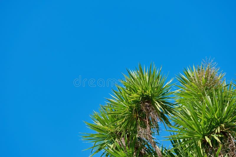 Feuillage des arbres contre un ciel bleu lumineux photographie stock libre de droits