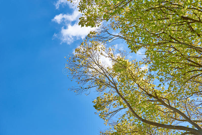 Feuillage des arbres contre un ciel bleu lumineux photo libre de droits