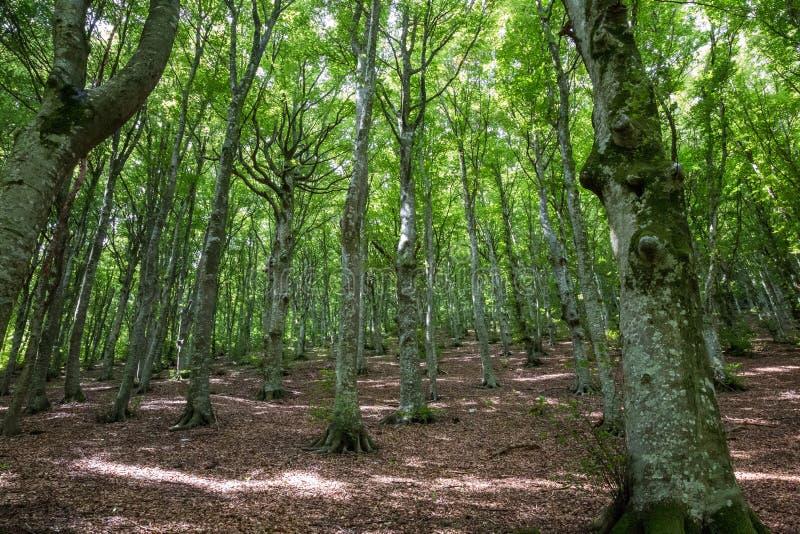 Feuillage en bois et vert image libre de droits