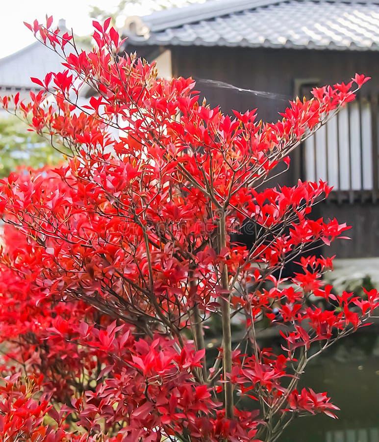 Feuillage entourant les raisons au temple de Kiyomizu-dera, Kyoto image stock